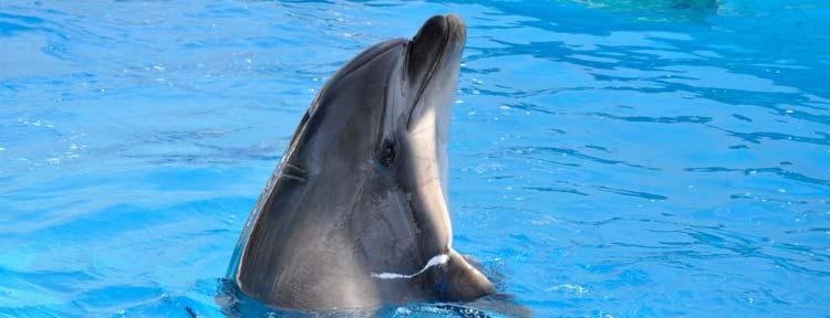 delfin spiele 1001